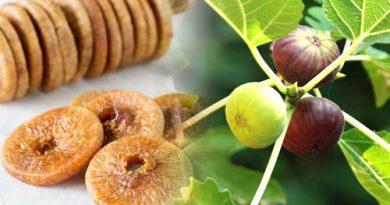 Anjeer (Fig) Eating Benefits In Marathi