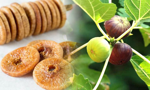Anjeer (Fig) Eating Benefits In Marathi