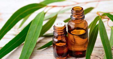 Nilgiri Oil Benefits In Marathi