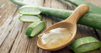 Aloe Vera Benefits In Marathi